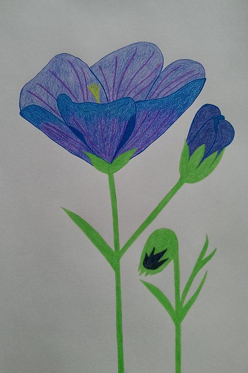 Drawing 34/16