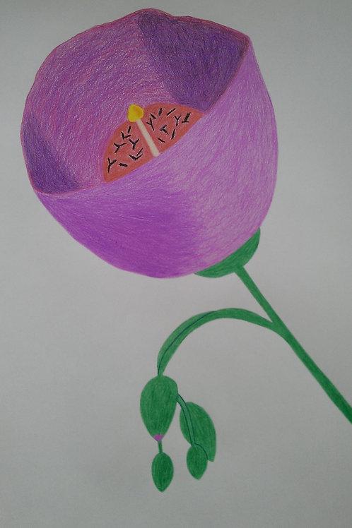 Drawing 30/16