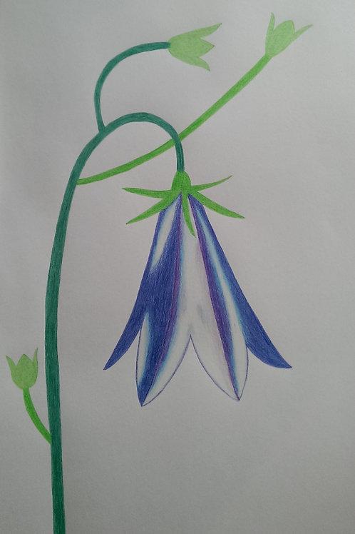 Drawing 24/16