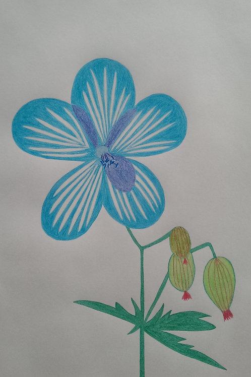 Drawing 16/16