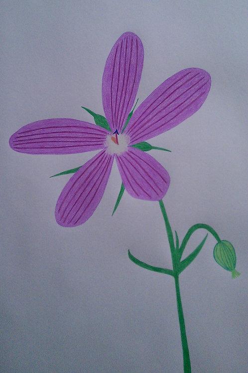 Drawing 19/16