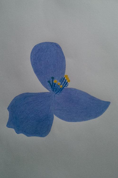 Drawing 9/16