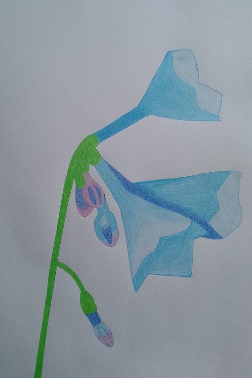 Drawing 27/16