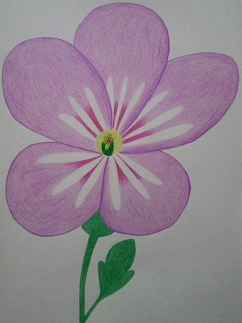 Drawing 43/16