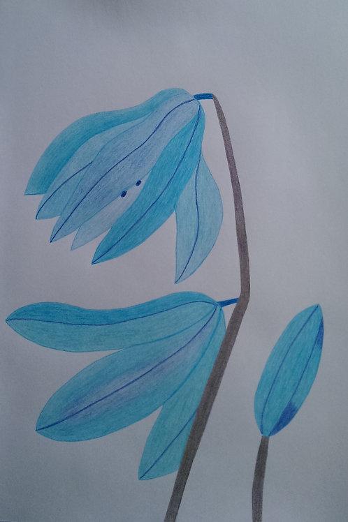 Drawing 28/16