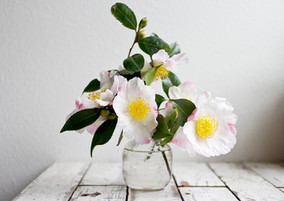 Bouquet of White Flowers.jpg