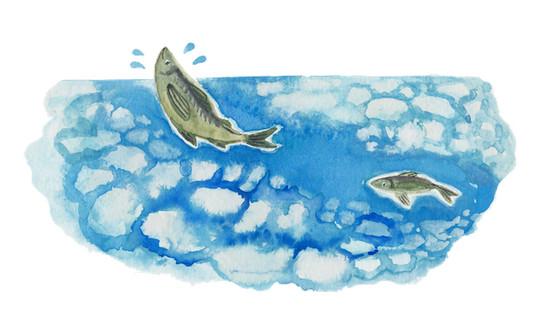 立春 魚.jpg