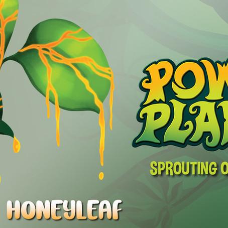 Know Your Herbal History: Honeyleaf