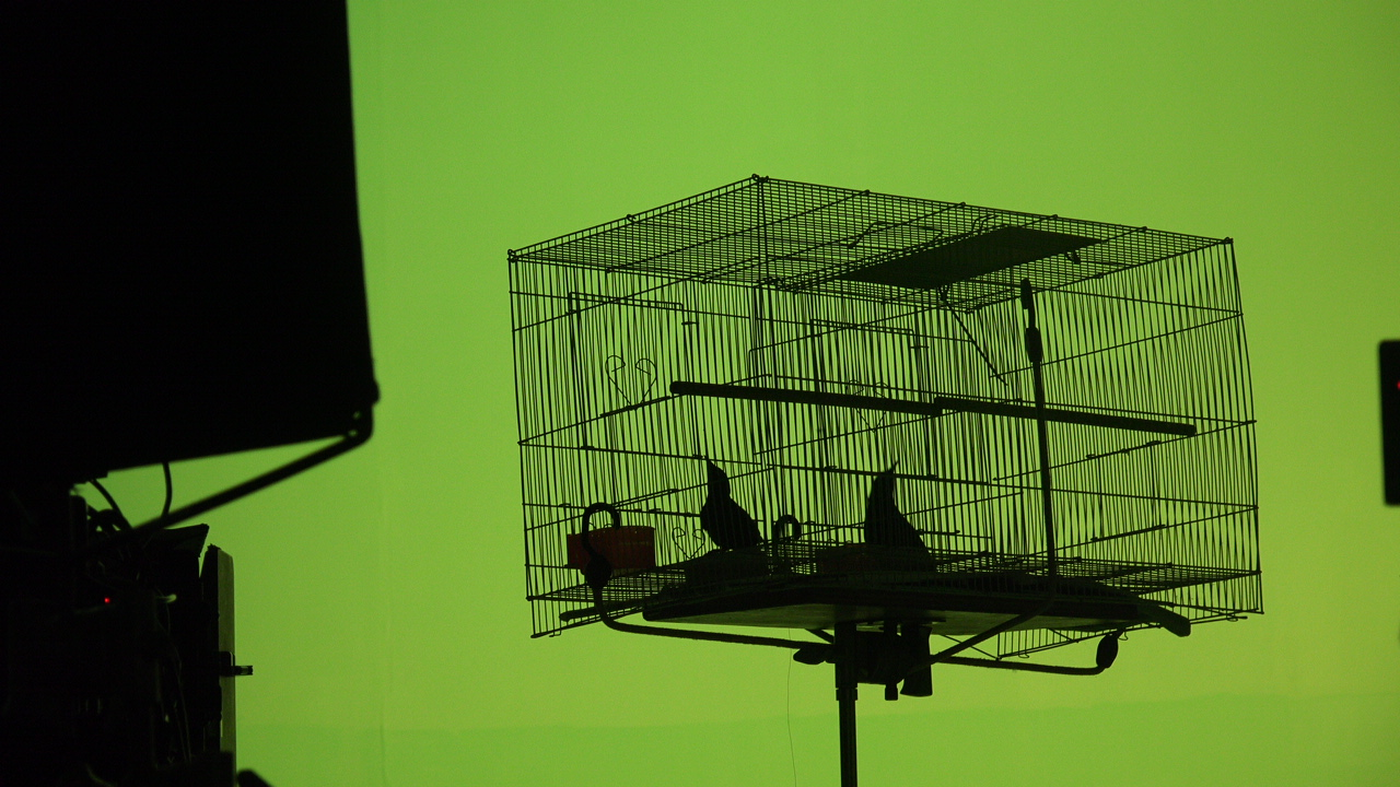 BIRDCAGE BTS INDUSTRIAL VIDEO PRODUCTION.JPG