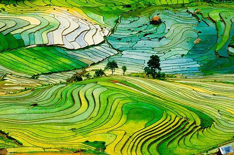 Rice Field 13.jpg