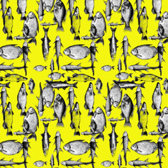 """""""sholly (fish) in yellow"""""""