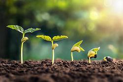 soybean-growth-farm-with-green-leaf-back