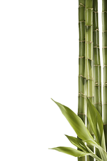 bamboo_PNG7_edited.png