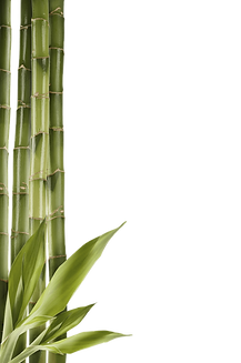 bamboo_PNG7.png