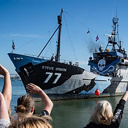 Sea Shepherds global and the Bloody Fjords operation.