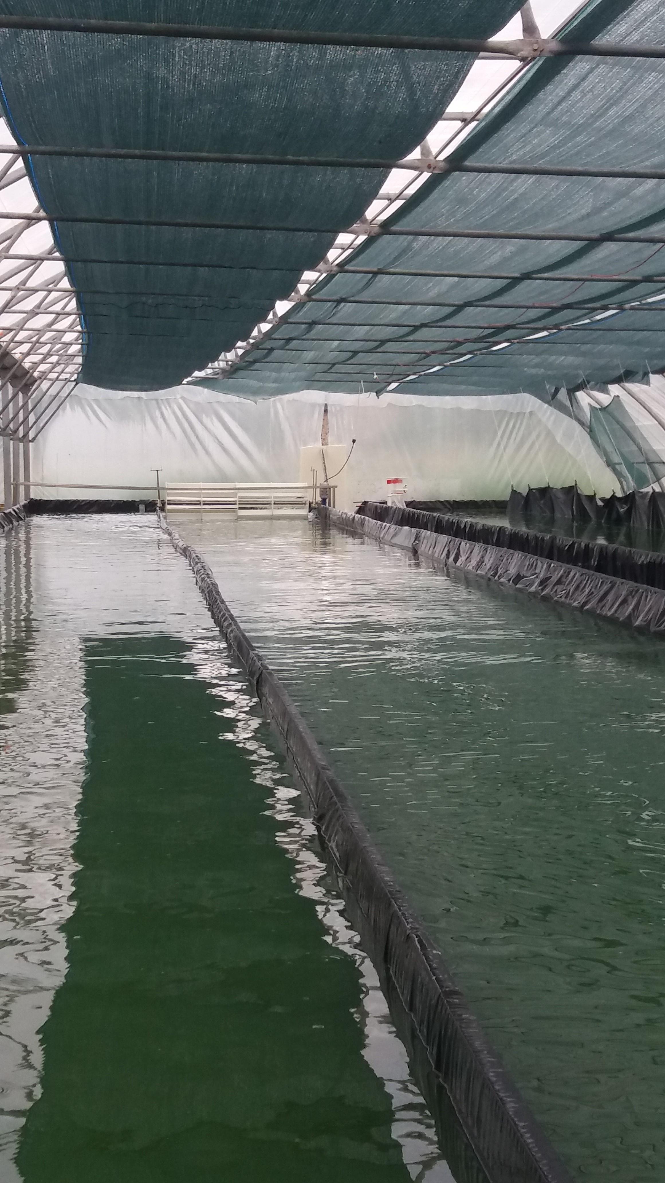 Bassins Spiruline