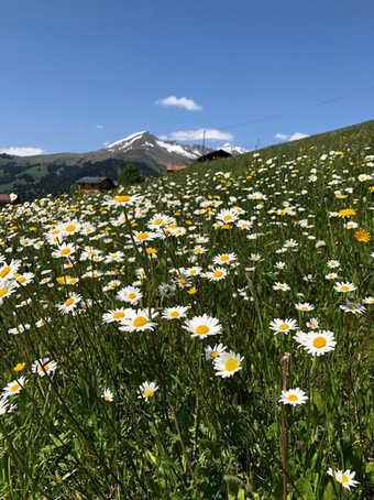 Retreat Stels Switzerland 2019