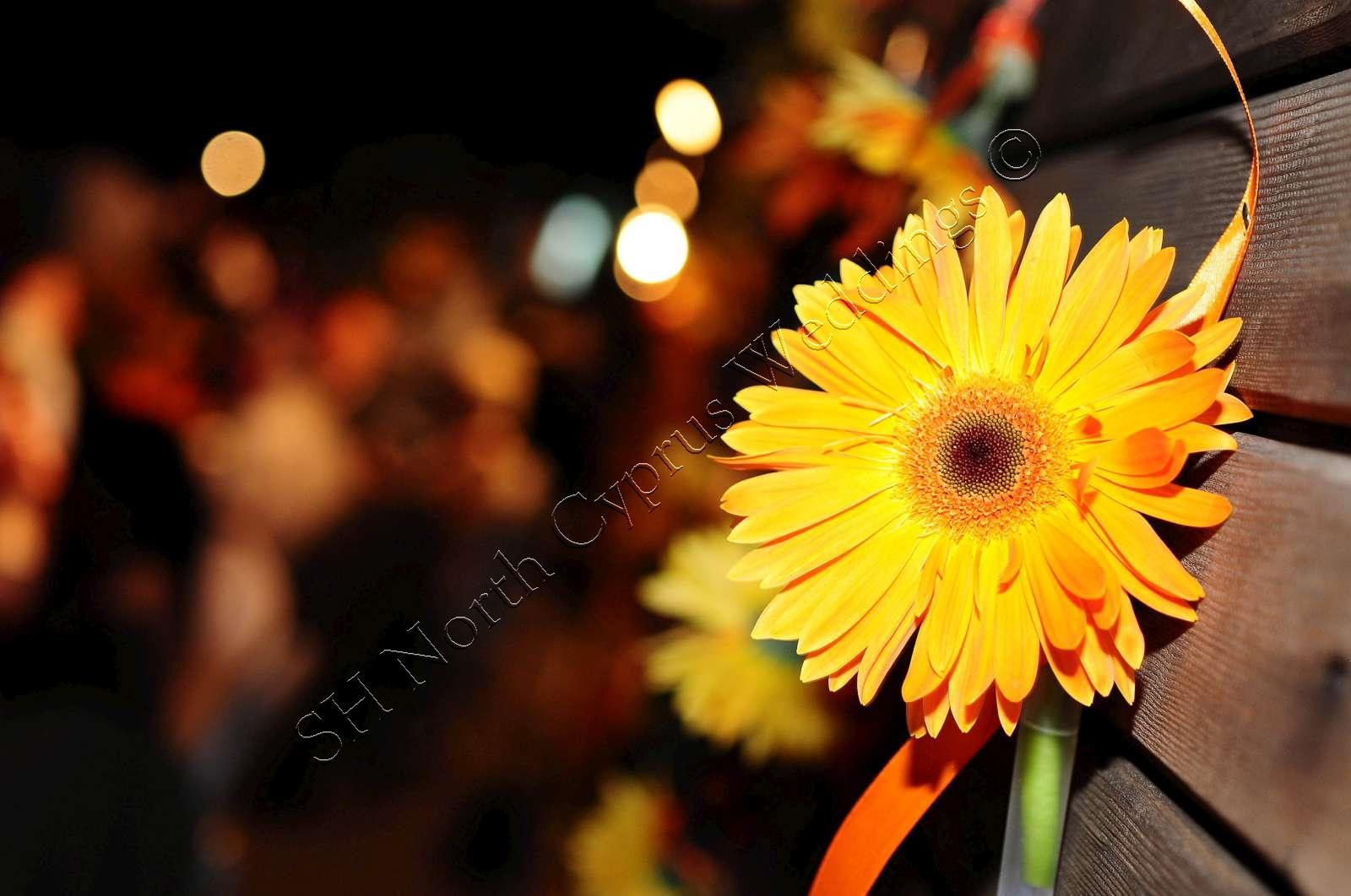 North Cyprus wedding flowers (77)