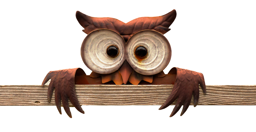 owl-3238454_1920.png