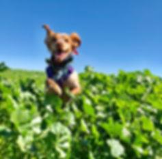 Dog training san diego puppy class