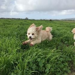 High Energy Dog Walking