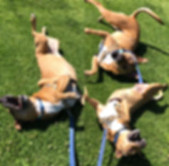Dog training san diego walk and train private