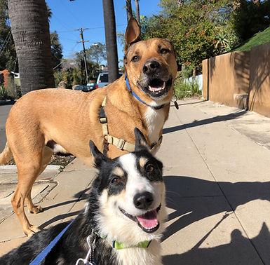 Dog training san diego overnight board and train