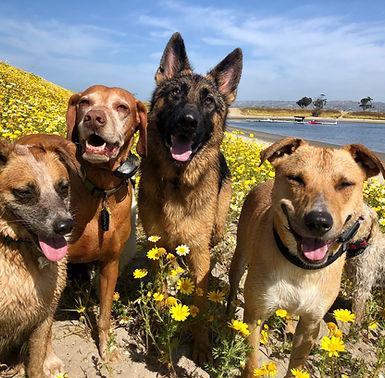 Dog training san diego good behavior