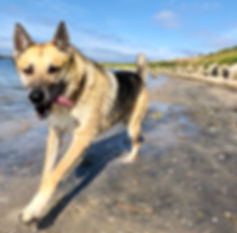 Dog training san diego specialty private