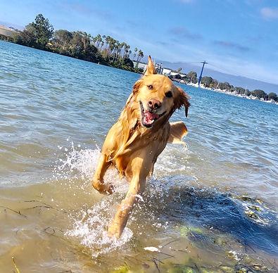 Dog training san diego consultation
