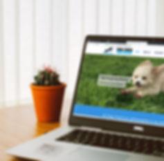 Dog training san diego online training