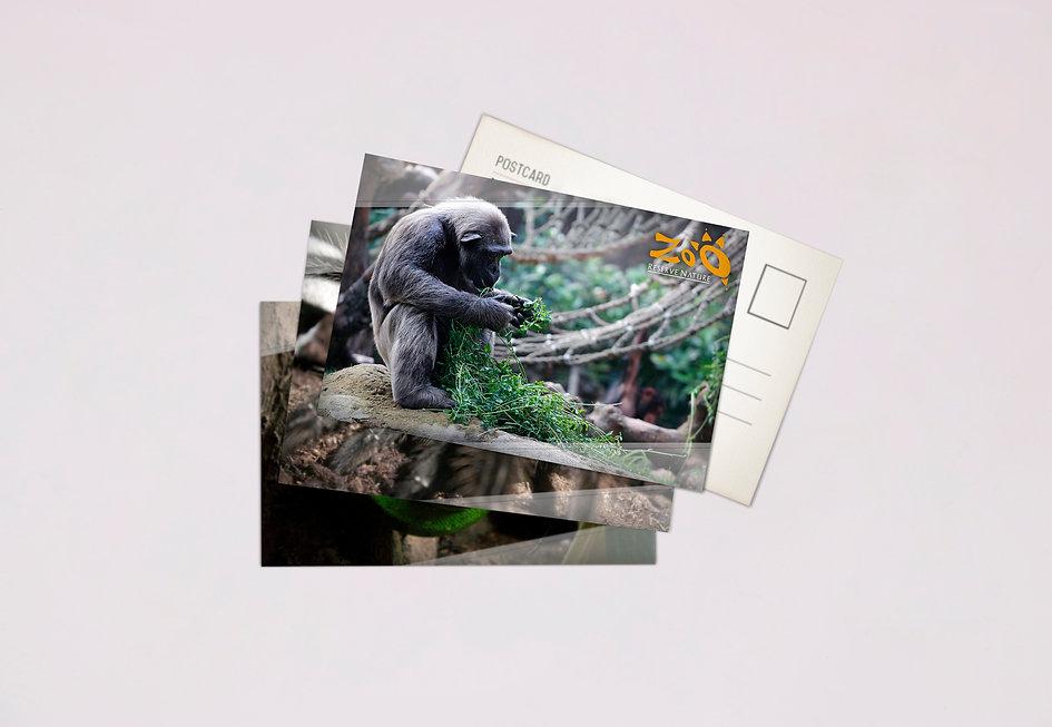 postales zoo.jpg