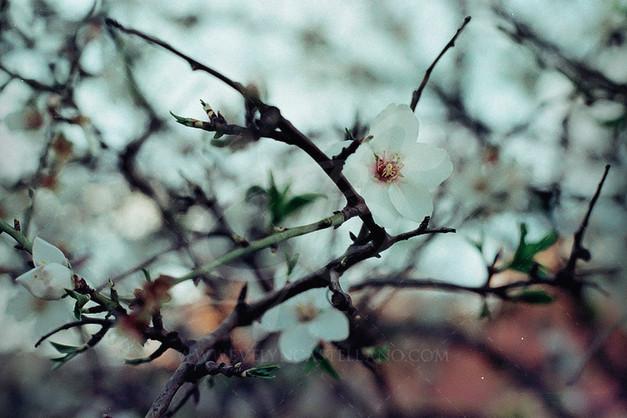 floralmendromarca.jpg