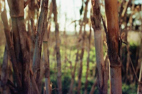 bambumarca.jpg
