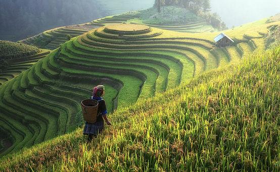 agriculture-1807576_1920.jpg