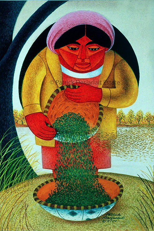 Woman cleaning Wild Rice - 1970