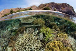 Komodo reef dive