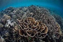 Raja ampat reef dive