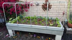 Starter Plants!