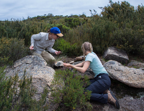 Catching Liopholis montana in Kosciusko national park. Photo by George Madani.