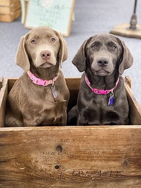 Maggie and Harper in Box.JPG