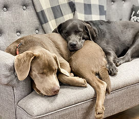 Maggie and Harper Asleep.JPG