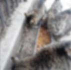 StrayCatsNYC (_straycatsnyc)1.PNG