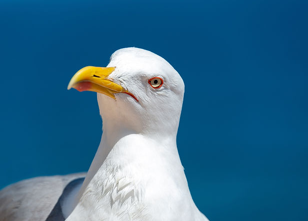 confused seagull