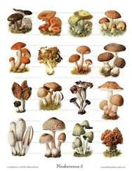 Mini Treatment Kit 9: Mushrooms