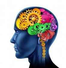 Kit 36: Brain Function Kit 2