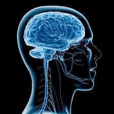 Kit 31: Brain Kit 1