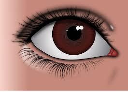 Kit 45: Eye Kit 1