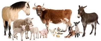 Kit 2: Milk, Animals