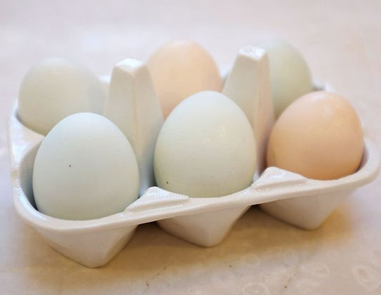 Kit 3: Components of Egg, Calcium Mix, Vitamin C Mix